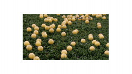 10 Balles caoutchouc réutilisables Reball Rental calibre 0.68